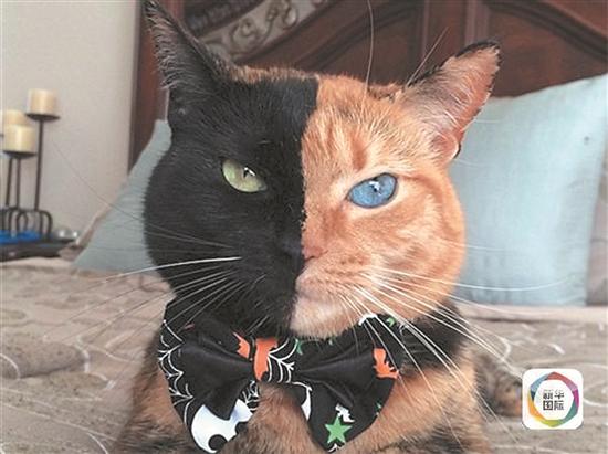 2016网络流行动物猫图片