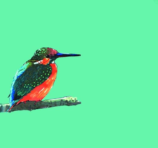 森系彩铅手绘小鸟