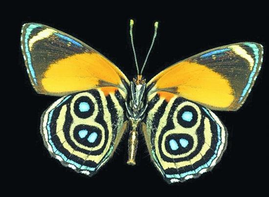 那就是蝴蝶下层翅膀是身体较弱的部分