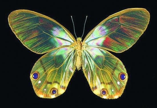 白色透明蝴蝶右侧翅膀p图素材