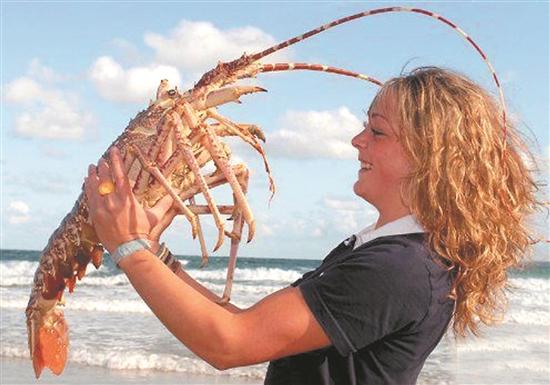 龙虾制品,罐装鲍鱼等现行关税为5%